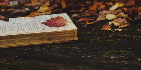 Leaves and Pages by Taylor Wright