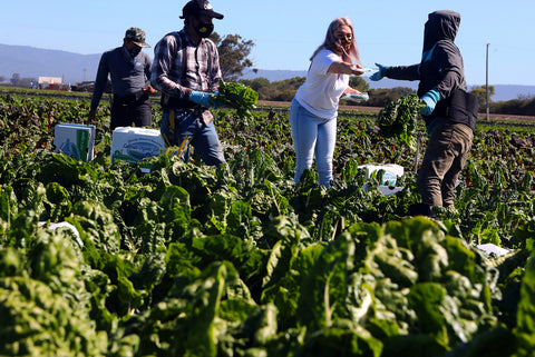 A woman standing in a field surrounded by farm workers, distributing masks