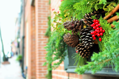 Typical Yule plants, holly and evergreen boughs