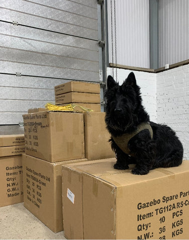 Wilfred Office Dog Packing Boxes