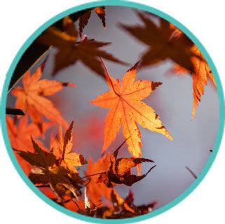 Your Chance to Embrace Autumn is Just Around the Corner! Join Richard Kwan this Sunday in Chinese Medicine Series: Living in Harmony with the Four Seasons