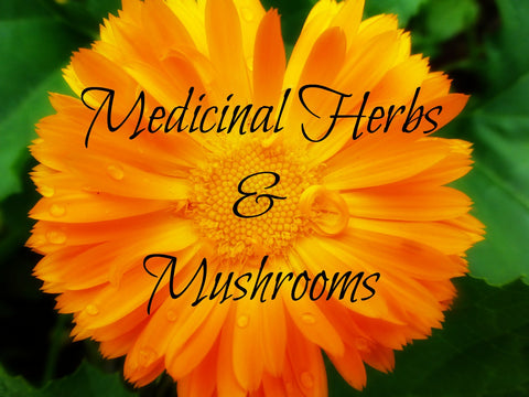 Medicinal Herbs & Mushrooms