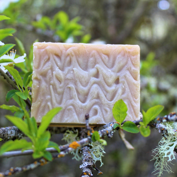 Henna (Black) Shampoo Bar - Organic, Probiotic, & Medicinal - Clearwater Cultures