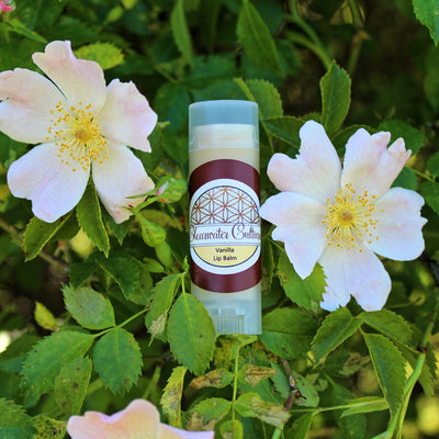 Vanilla - Organic & Probiotic - Lip Balm - .15 oz. - Oval Tube - Clearwater Cultures