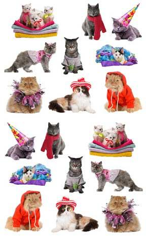 STRIPS GT PAMPERED CATS