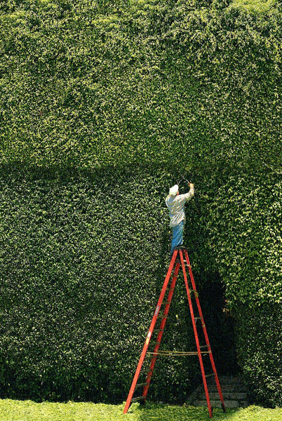 The Hedge Clipper