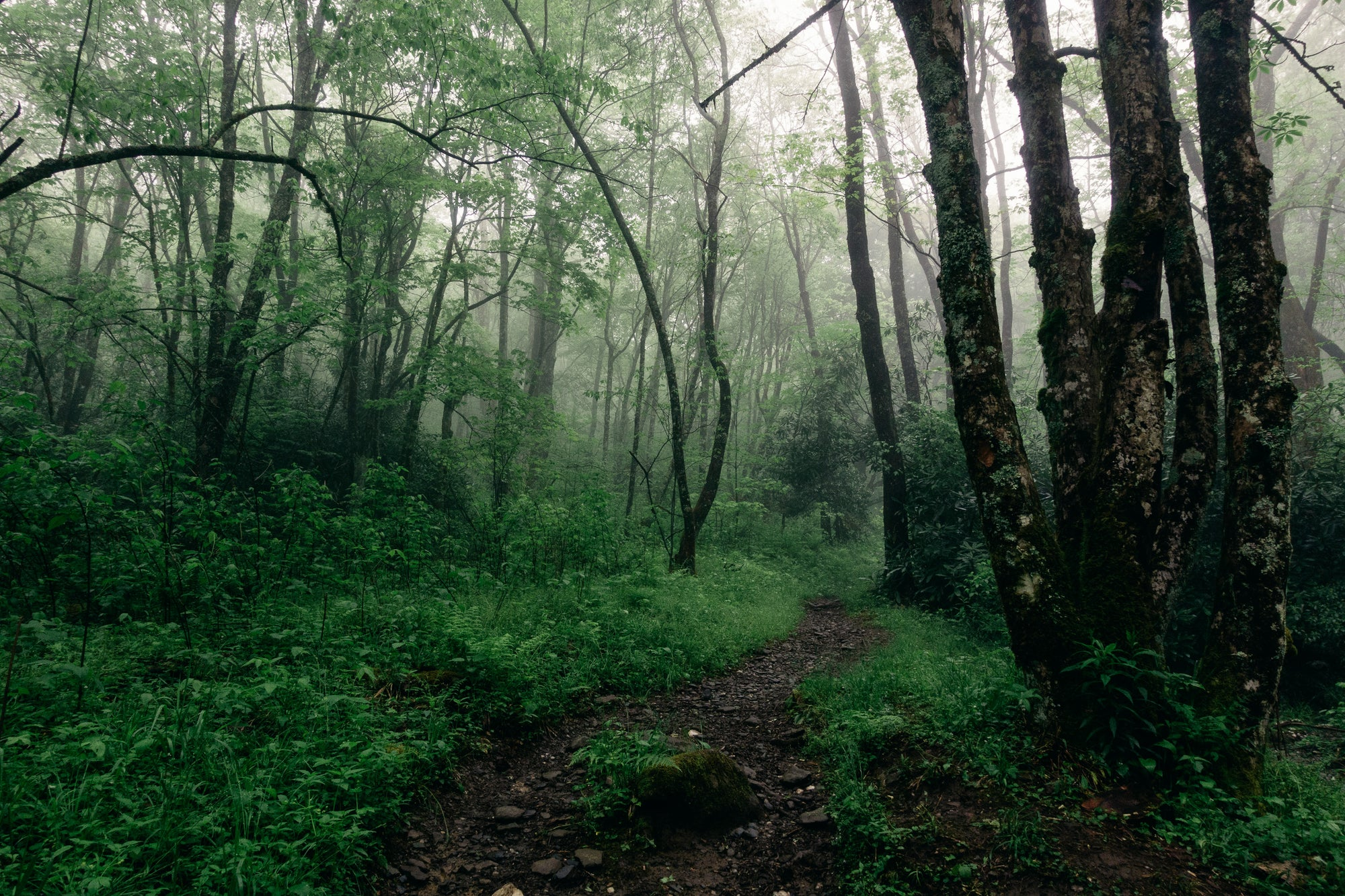 A Long (WET) Weekend in GSMNP, by Bryan Banducci