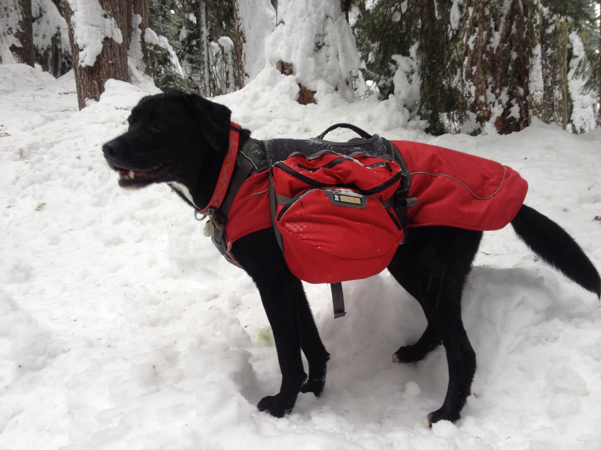 3 Tips for Hiking Safely with Your Dog in Winter by Alicia Baker