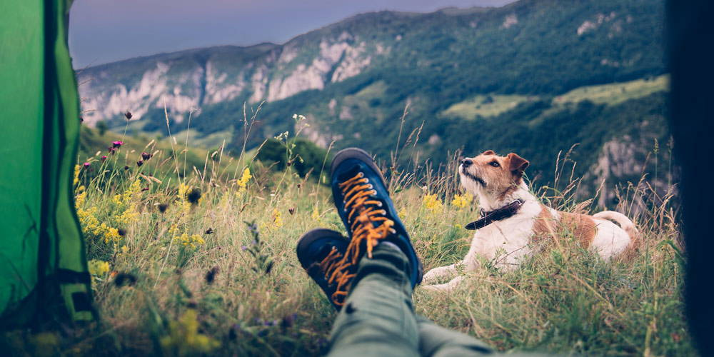 Camping With Dogs: 5 Tips for a Safe and Enjoyable Trip