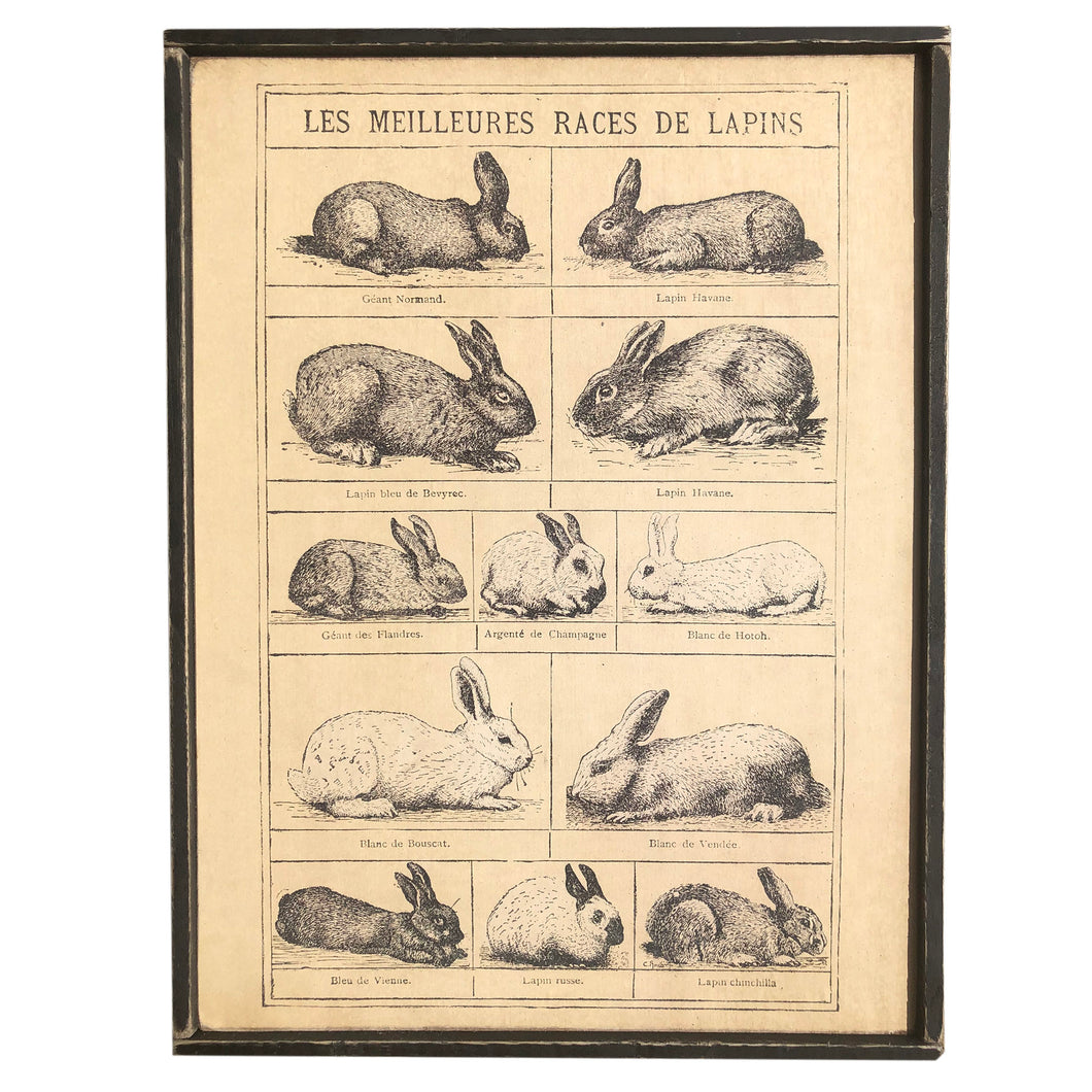 Bunny \\ Rabbit Chart \\ Vintage Style Framed Print