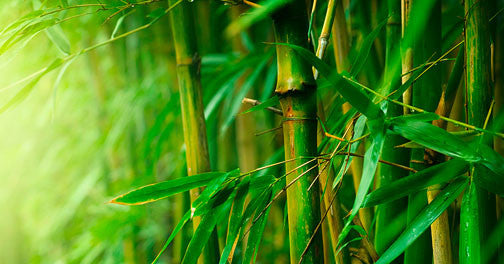 The Benefits of Bamboo in Sun Protective Clothing