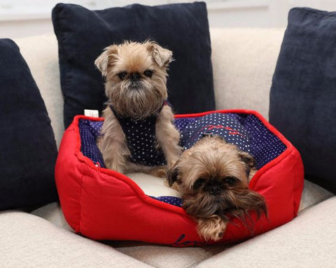 ED Ellen DeGeneres Pet Bed at the #EDbypetsmart Event Featuring Itty Bitty the Griff and Ralphie