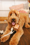 Peachy Cotton Co Pumpkin Patch Bandana