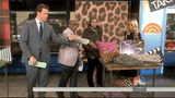 Arianna Belle Leopard Velvet pillows featured on the Today Show!
