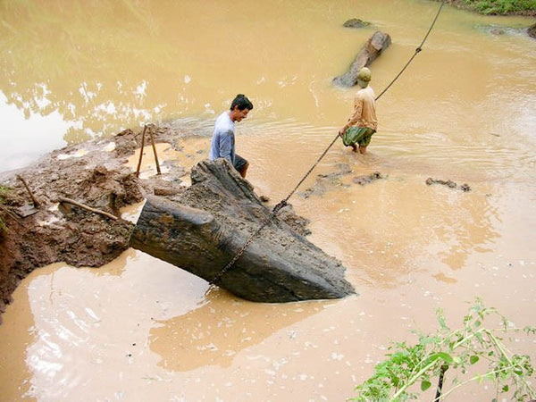 Pulling wood from a river