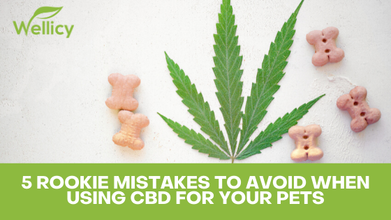 Mistakes to Avoid When Giving your Pet CBD
