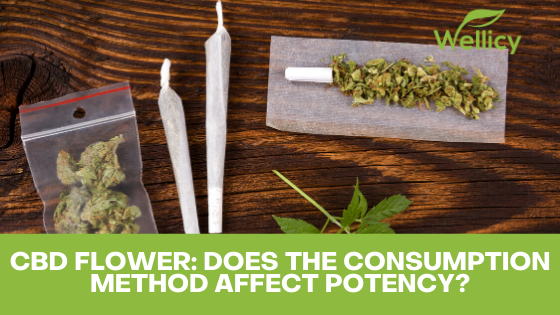 CBD Hemp Flower: How the Consumption Method Affects Potency