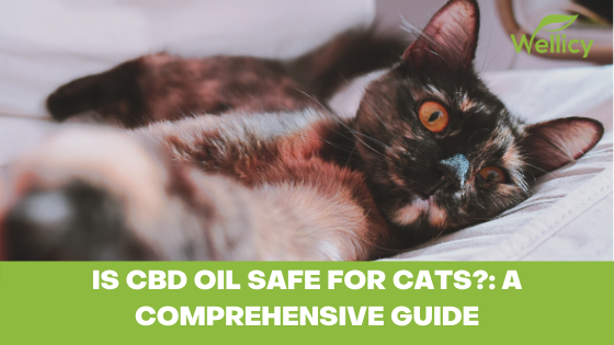 Is CBD Oil Safe for Cats?: A Comprehensive Guide