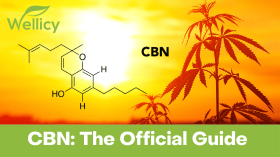 CBN The Official Guide Wellicy CBD Hemp Blog