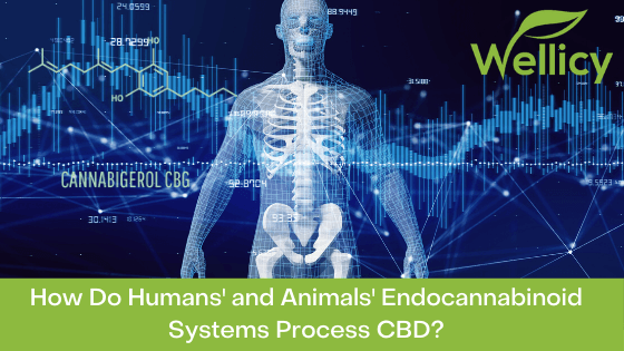 How do Humans' and Animals' Endocannabinoid systems process CBD Hemp blog