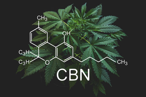 CBN and the Endocannabinoid System
