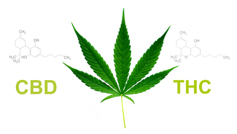 What Does CBD and Delta-9 THC Have in Common?