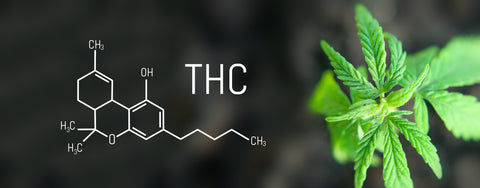 Delta-9 THC and the Chemical Composition of Cannabis