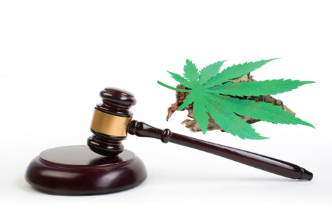 Is THC-P Legal?
