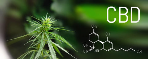 How CBD Can Help Boost Immune System Health