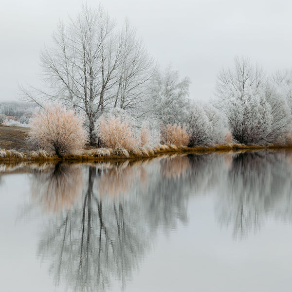 'Apricot Trees' Photographic Print, Kellands Pond
