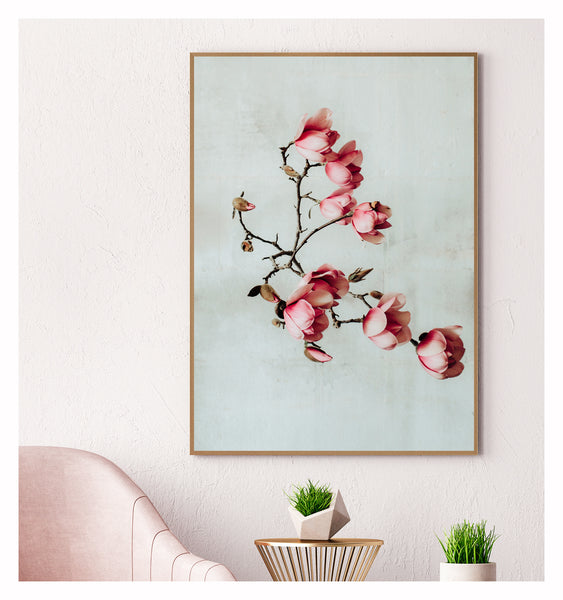 Spring Magnolias Photographic Print, Limited Edition