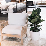 indoor plant fiddle leaf fig lounge room