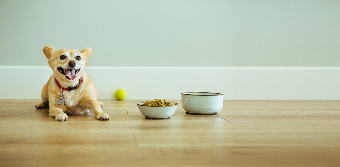 The Healthiest Dog Food at Your Doorstep