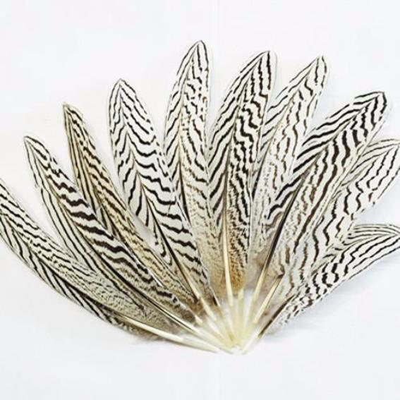 "Natural 6 to 10"" Silver Pheasant Amond Tail Feathers ((SECONDS)) x 10"