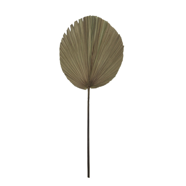 Natural Dry Palm Fan Frond Leaf Stem 90cm - Style 3