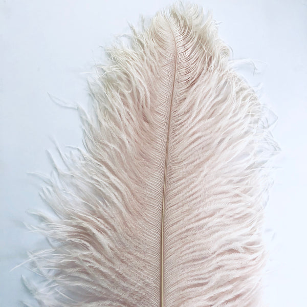"Ostrich Wing Feather Plumes 60-65cm (24-26"") - Champagne ((SECONDS))"