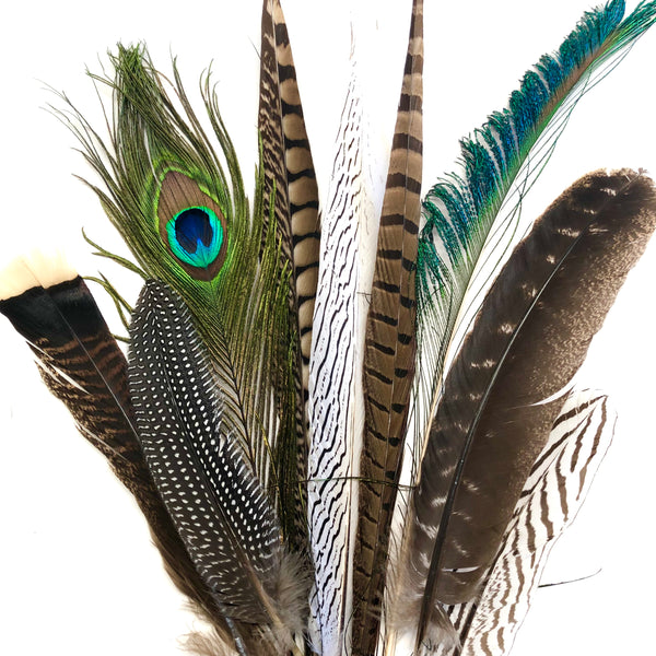 Large Natural Feathers 20-35cm Mixed Pack x 10
