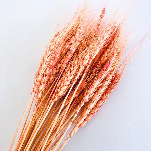 Natural Dry Wheat Grass Stalk Stems x 10 pcs - Pink