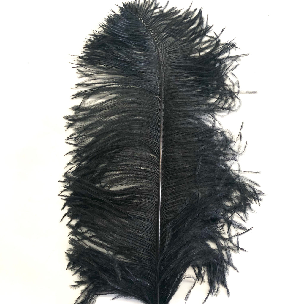"Ostrich Wing Feather Plumes 60-65cm (24-26"") - Black"