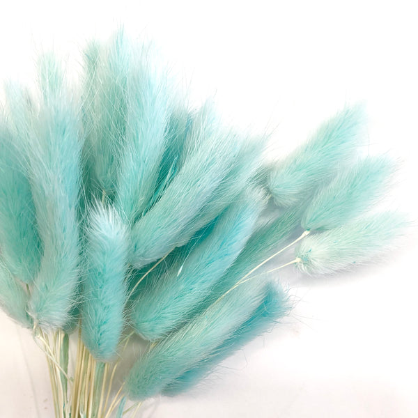 Natural Dried Rabbit Tail Grass Flower Stem Bunch - Tiffany Blue
