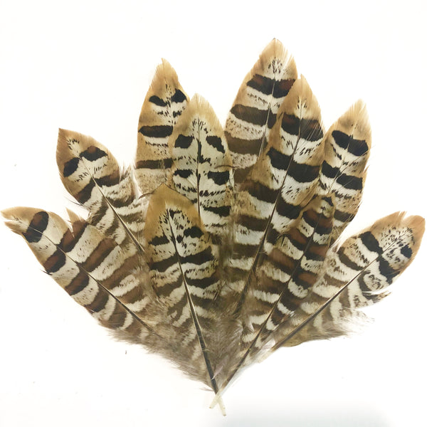 Natural Mini Reeves Pheasant Feather x 10 pcs