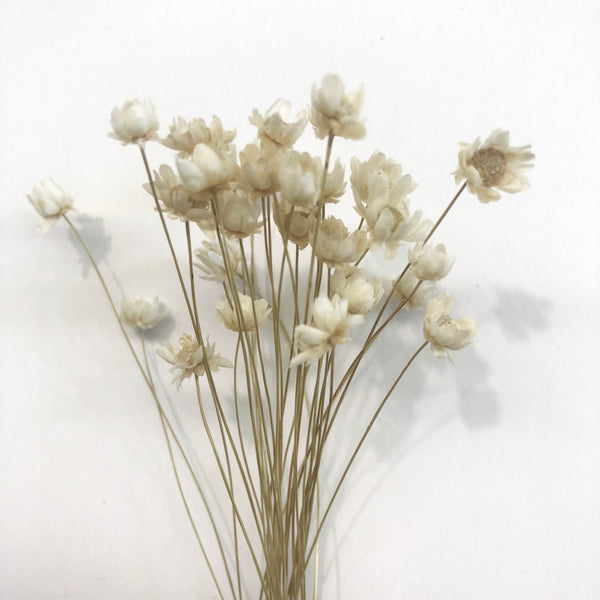 Natural Dry Mini Daisy Flower Stems - White