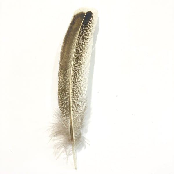 Cinnamon Turkey Mottled Wing Feather