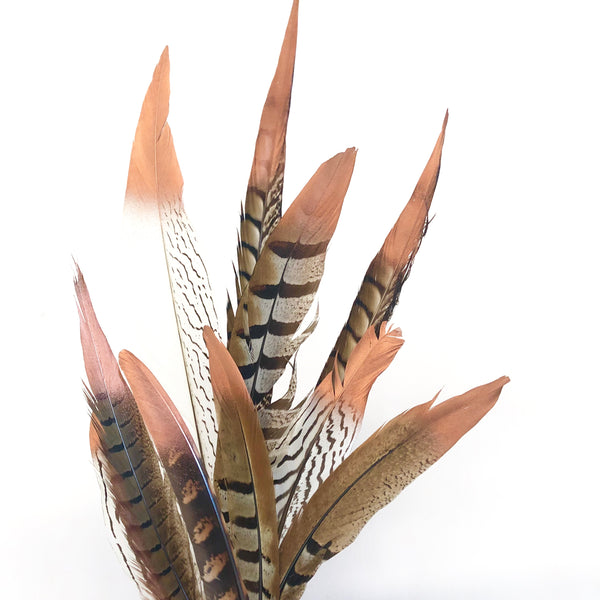 Natural Pheasant Feathers Assorted - Metallic Copper Tipped x 10