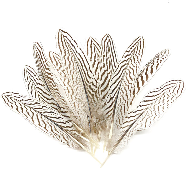 "Natural 6 to 10"" Silver Pheasant Amond Tail Feathers x 10 pcs"