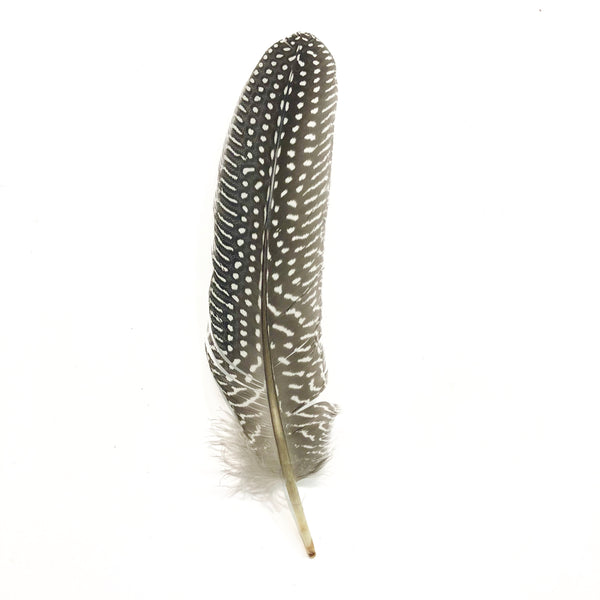 Guinea Wing Feathers 10 grams - Natural