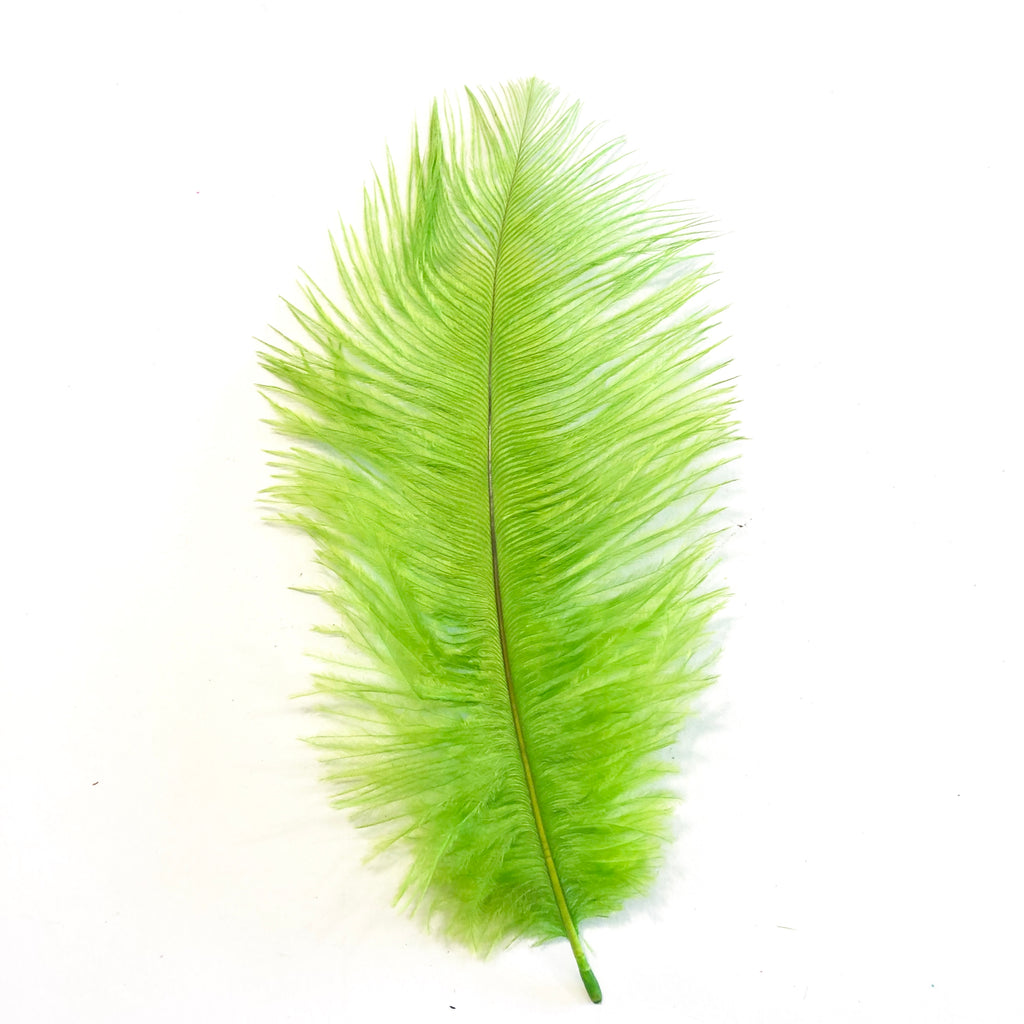 Ostrich Feather Drab 6-15cm x 20 - Lime Green