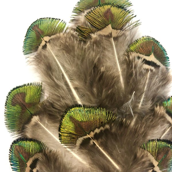 Natural Gold Shell Iridescent Peacock Feather Plumage x 10 pcs