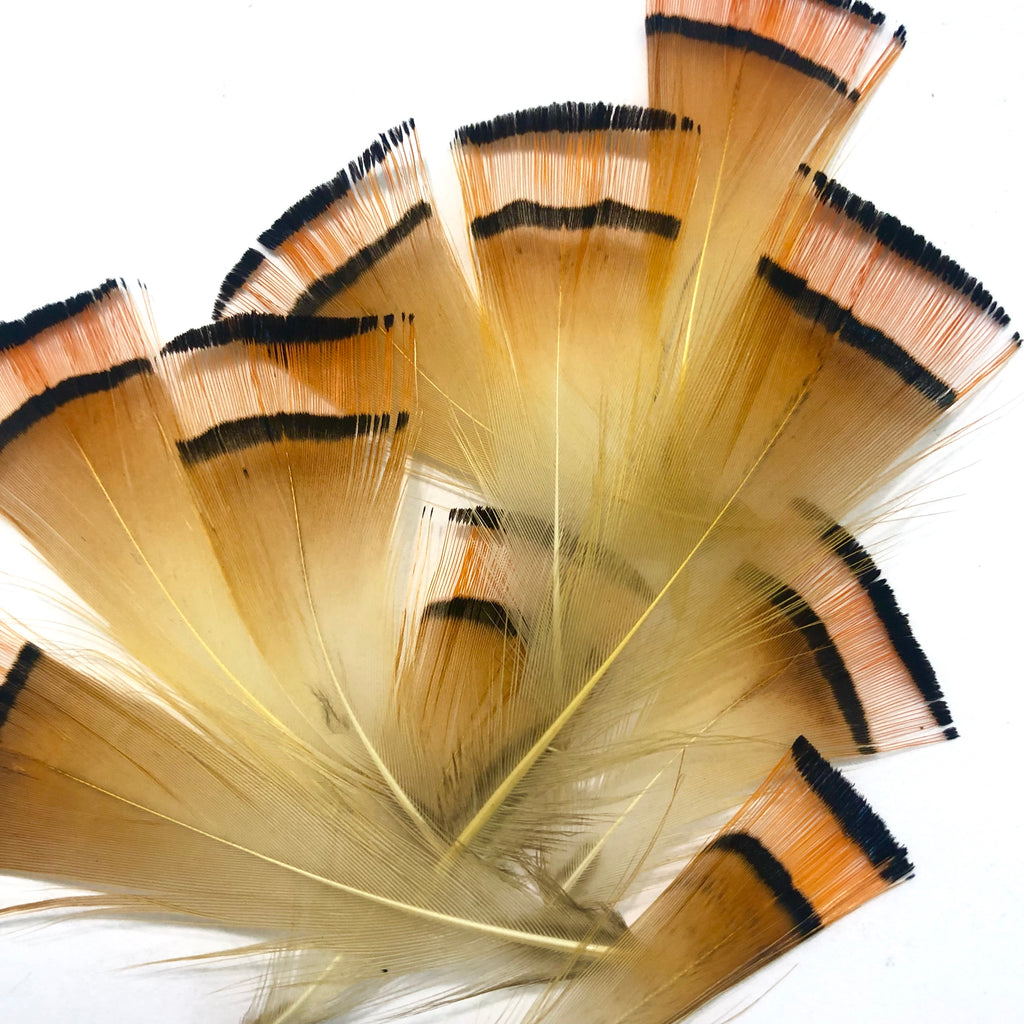 Natural Golden Cape Pheasant Feather Plumage x 10pcs
