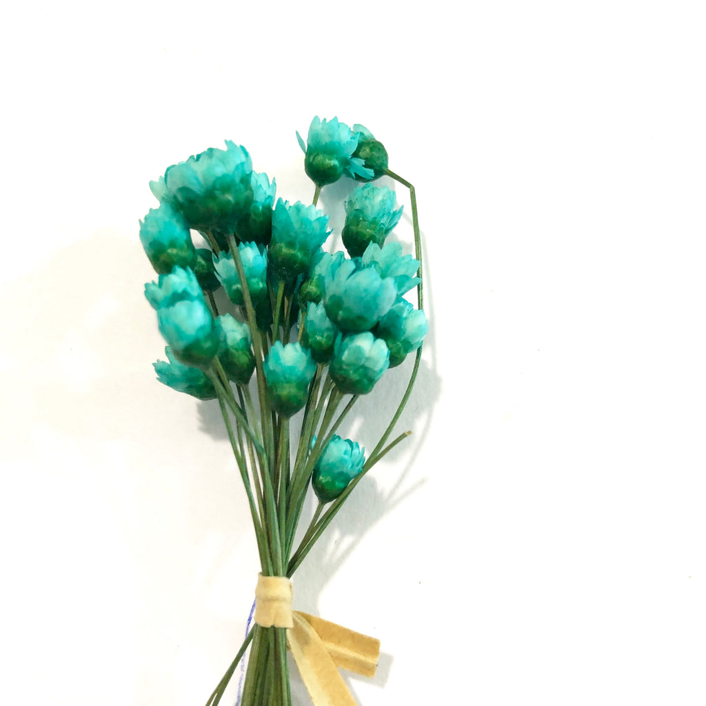 Natural Dry Mini Daisy Flower Stems - Tiffany Blue